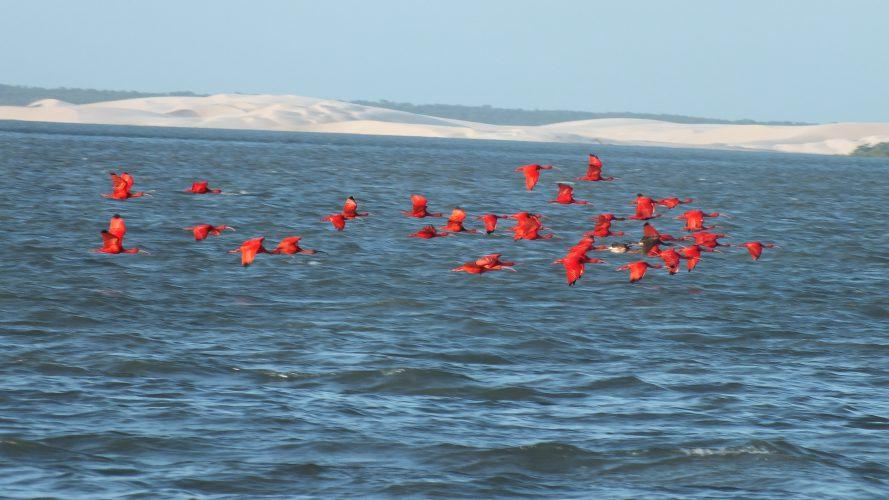Parnaiba, le seul delta des Ameriques